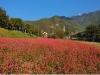 영월의 새로운 가을명소, 붉은메밀밭이 더욱 화려해진다!