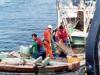 강원도, 봄철 산란기 어패류 보호를 위한 불법어업 합동 단속실시