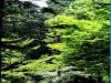 국제 생물다양성의 날, 산림의 다양한 가치 발휘되도록 관리한다.